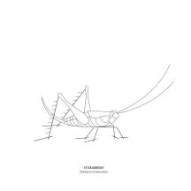 """STICKitGREEK_22"" Modern design of a grasshopper, made by Elias Dekoulakos / Μοντέρνο σχέδιο ακρίδας, του Ηλία Δεκουλάκου."